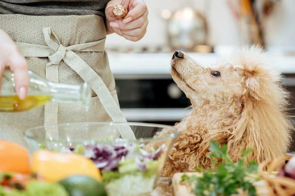 Hund mit Salat | Frostfutter Perleberg
