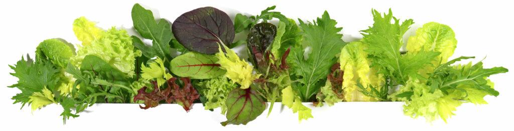 Salat | Frostfutter Perleberg