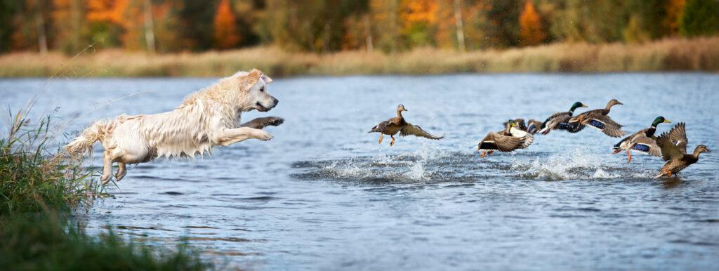 Jagender Hund   Frostfutter Perleberg